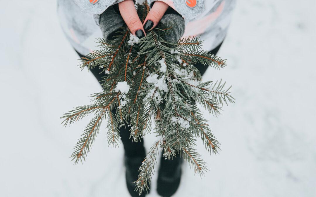 Mazzo di abete in mano a una ragazza sulla neve